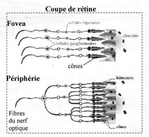 e.m.c.2 - Physique - Optique - L oeil e3fed5307c2c